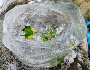 nachher: Kristallschüssel